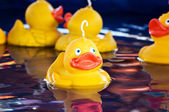 Fairground ducks — Stock Photo