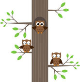 Owls on tree — Stock Vector