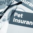 Pet insurance — Stock Photo