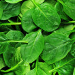 Spinach — Stock Photo #6699267