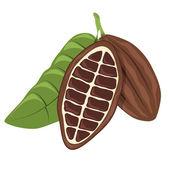 Cacao beans colour — Stock Vector