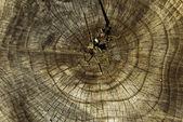Wood circles — Stock Photo