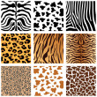 Animal Skins — Stockvector #6503886