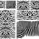 Zebra Skin — Stock Vector