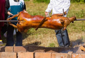 Pig on a spit — Stock Photo