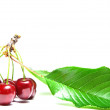 Royalty-Free Stock Photo: Fresh cherry with a tail