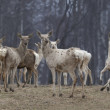 Deers in a forest — Stockfoto
