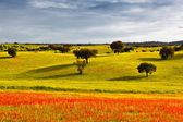 Greenfield at the beginning of spring. — Stock Photo