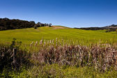 Countryside with beautiful green field. — Stock Photo