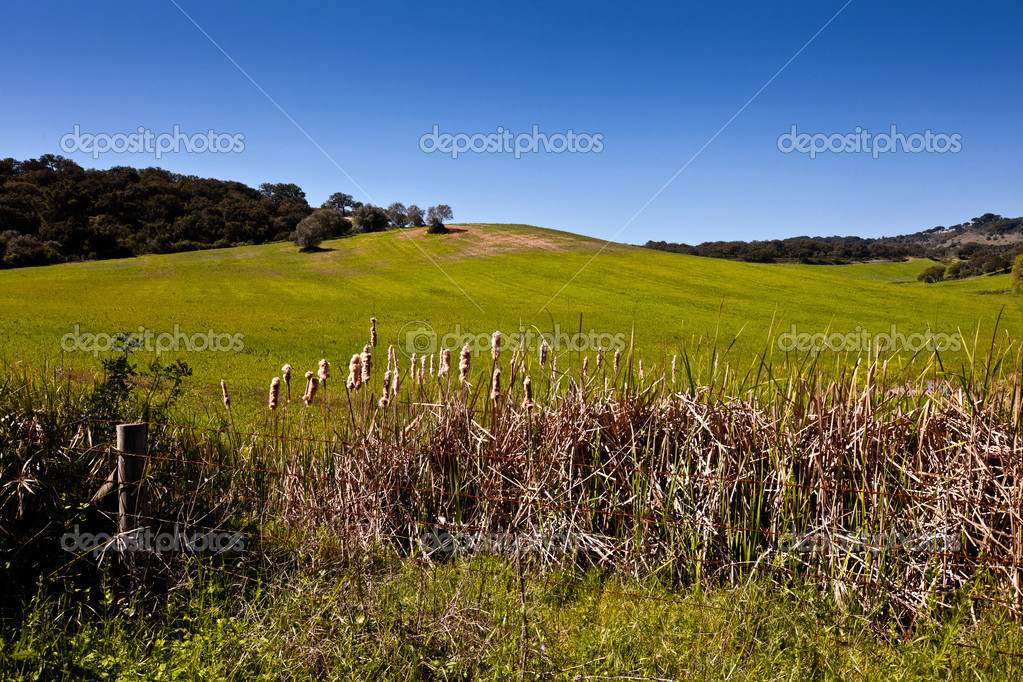 Beautiful green field with trees in the background. — Stock Photo #5987970