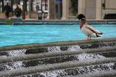 şehirde ördek — Stok fotoğraf