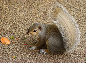 Little Squirrel — Stockfoto