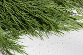 Dill in water. — Stock Photo