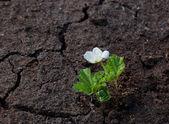 White flower. — Stock Photo
