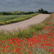 Stok fotoğraf: Landscape with poppies.