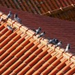 Pigeons on the roof — Stock Photo #6004456