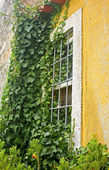 Yellow Window — Stock Photo