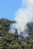 Fire in the oak and pine forest — Stock Photo