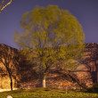 City Wall Park with Green Willow and Shadows Beijing China — Stock Photo