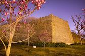 Parco cittadino di parete con cina pechino magnolie rosa — Foto Stock