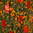 Orange New Years Tree with Red Packets  Beijing China — Stock Photo