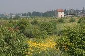 Countryside outside of Shanghai China — Stock Photo