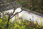 Růžová broskev žluté řepky květy bílé čínské zdi sichuan — Stock fotografie