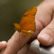 Butterfly Hand Camera — Stock Photo #6077702