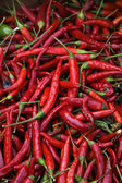 Red Cayenne Chili Peppers — Stock Photo