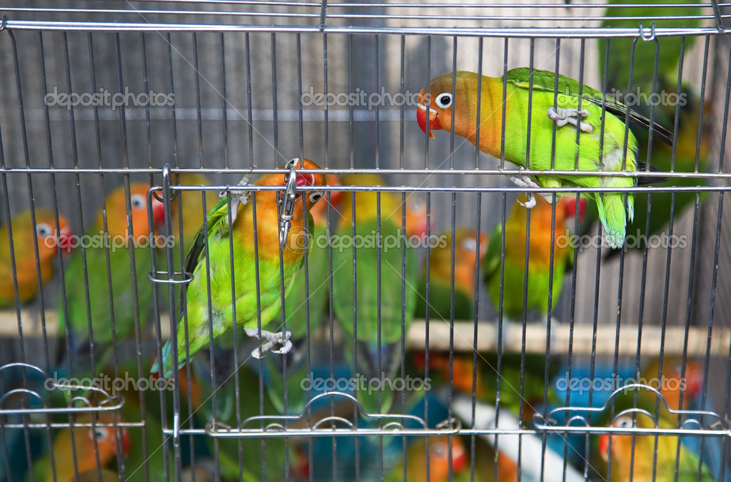 Yellow And Green Parrots Green Yellow Parrots Hong Kong Bird Market Black And White Eyes Looking at
