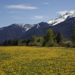 Yellow Flower Farm Snow Mountains Countryside Glacier National P — Stock Photo