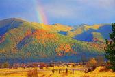Montana abstraktní zlatý rainbow yellow tamarack stromy v kopcích — Stock fotografie