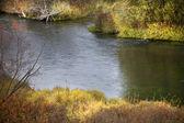 Zonlicht rivier reflecties nationale bison variëren charlo montana — Stockfoto