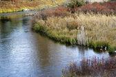 Floden reflektioner gräs höst färger nationella bison utbud charlo — Stockfoto