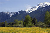 Yellow Flower Farm Snow Mountain Montana — Stock Photo
