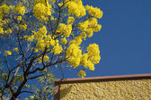 Yellow Flower Brown Adobe Wall Mexico — Stock Photo