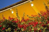 Amarillo rojo bouganvillia adobe techo méxico — Foto de Stock