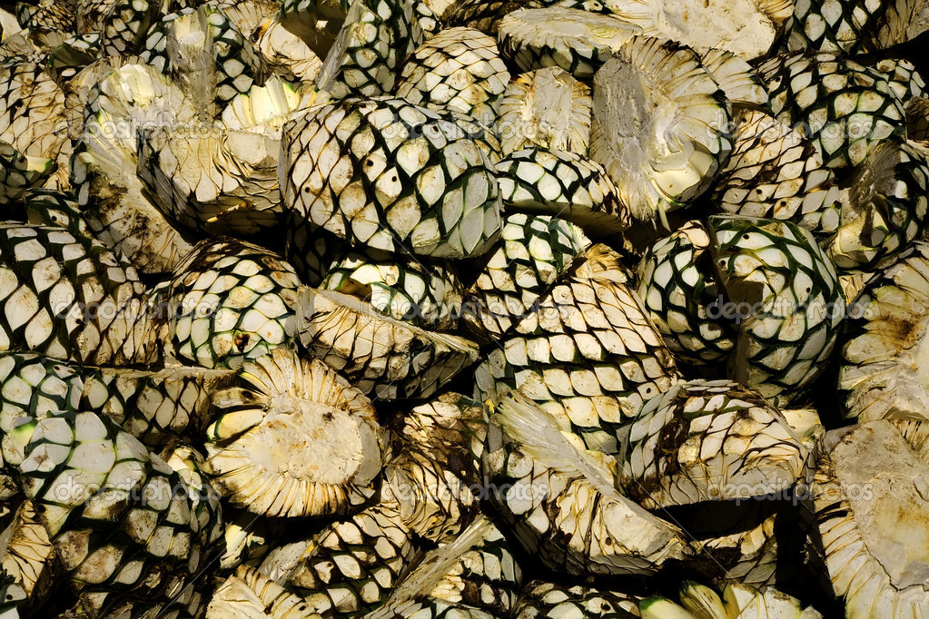 how to eat agave fruit