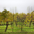 Vineyards Fog Tree NapCalifornia — Stock Photo #6127610