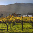 Fall Wine Vines Yellow Leaves Vineyards Fog Tree Napa California - Stock Photo