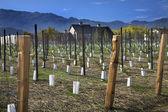 Winery New Vineyards Napa California — Stock Photo
