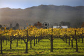 Fall Wine Vines Yellow Leaves Vineyards Fog Tree Napa California — Stock Photo