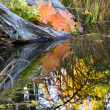 Leaves Water Reflections Fall Colors Van Dusen Gardens — Stock Photo