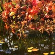 Leaves Water Reflections Fall Colors Van Dusen Gardens Vancouver — Stock Photo