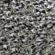 Stock Photo: Snow Geese Abstract Thousands of Snow GeeseTaking Off and Flying