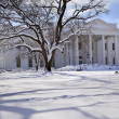 White House Trees After Snow Pennsylvania Ave Washington DC — Stock Photo