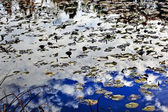White Clouds Blue Sky Reflection Abstract Van Dusen Gardens Vanc — Stock Photo