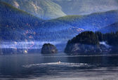 Motor Boat Going Out of Deep Cove Harbor Vancouver BC Canada — Stock Photo