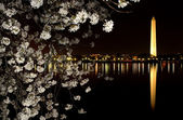 Washington Monument Cherry Blossoms Night Shot — Stock Photo