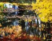 Yellow Tree Water Reflections Van Dusen Gardens — Stock Photo
